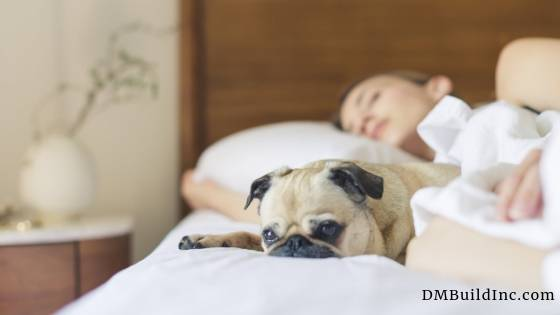 Additional Dwelling Units - Rent it out for income potential Sleeping in bed with a pug dog